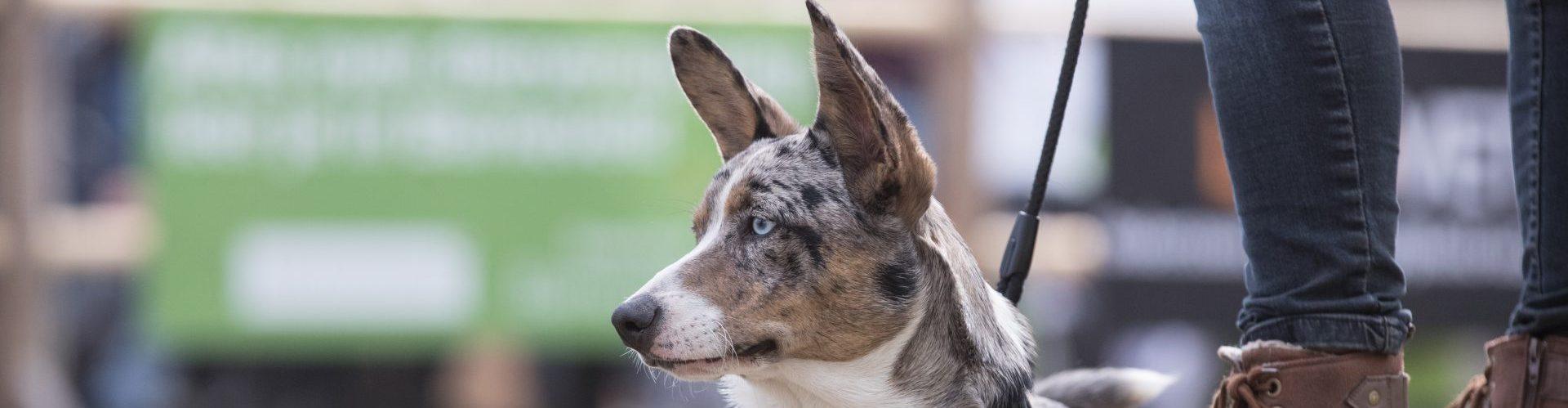 Mooiste Hond van Nederland (1)