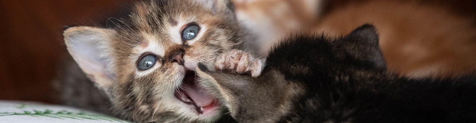 Bos_Kittens(2)