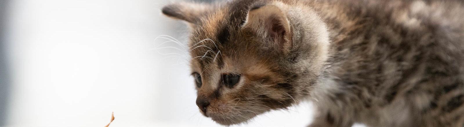 Bos_Kittens(5)