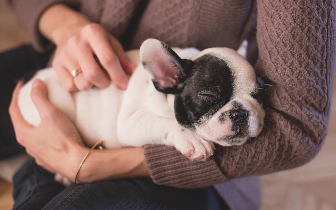 puppy hond aanschaf