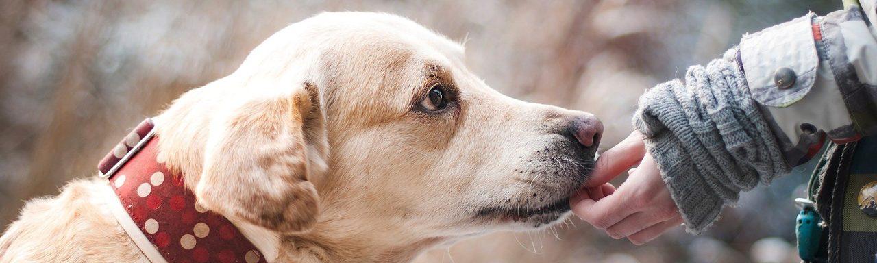 Hond beloning – artikel maart 2021